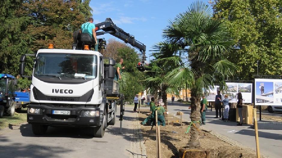 Palme zasađene na Kalemegdanu, FOTO: JKP